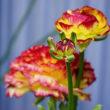 小さな庭の春の花