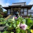蓮の花を求めて富士宮駅~白糸の滝