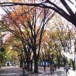 10才と3才       ケヤキ広場