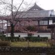 今井町 桜だより