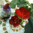 カリオペも開花して