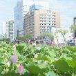 千秋公園のハスの花