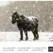 寒立馬の写真展