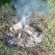剪定した果樹の枝を焼却しました