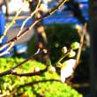 『春の便り』 新島襄