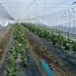 大臣官房信夫隆生政策課長に山形の農業を紹介しました。