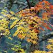 秋深まる季節(Ⅸ)