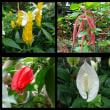 小田原で花いっぱい