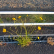 黄色の雑草