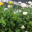 街で、出会った花たち  (再開)