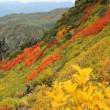 9月13日(水)のつぶやき★北の大雪山黒岳のお花畠が綺麗だ!間もなく始まる紅葉前線が日本列島を南下する始発点ですね!★