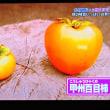 11/19 シムラ 天空カボチャ 甲州百目柿(ころがき)