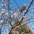 もうすぐ春ですねえ🎵🎵🎵