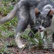 草を食べる猫