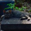 最近であった猫たち MC5235-3681