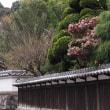 第176回古都旅歩き 岩船寺