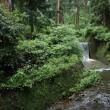 雨の参道(大雄山最乗寺)