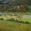 ♪‥利根川の水は透き通ってました。(諏訪峡)