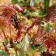 志賀高原四十八池のヒカリゴケ 等の植物