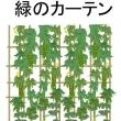 温暖化対策!自宅で緑のカーテンを作ってみませんか?