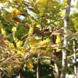 武蔵の国 街ごよみ1/18 雪がない街に春の兆し