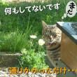 狩りに来たトラ(=^・^=)は、すごすごと~