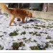 今日の天気は雪