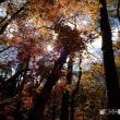 平成29年11月19日(日) 紅葉谷レポ♪