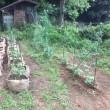 野菜の袋仕立