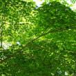 初夏の鎌倉・羽田・川崎方面小旅 ー 鎌倉 円覚寺編 2ー