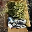 ●12/5 環境の緑化と美化報告 カレックスを植えました。大久保農園でも作業。