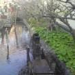 180325 朝の散歩 昼の散歩125  多摩川 と 六郷用水
