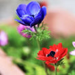 花彩々   春の花便り