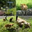 ゆうゆう公園の猫たち