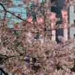 舞鶴公園の桜からp6ラスト