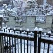 安納芋焼いて(@_@)、大雪警報4年ぶりで(@_@)