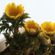 春告げる花たちを愛でる