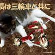 【5名】三輪車についてのアンケートに答えて、子ども商品券(2千円分)をゲット!