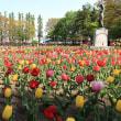 チューリップ(平和公園)