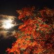 今宵の月と