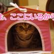 キティちゃんハウス