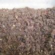 シクラメンの種採り、種蒔き栽培に初挑戦