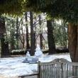 つくば実験植物園名残雪