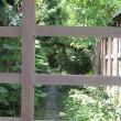 横浜英和87 「カトリック清泉小学校、そして段蔓」