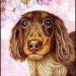 色鉛筆画462 (犬のももちゃんと桜)