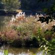 身近な紅葉を愛でる 探鳥の公園