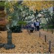 三渓園の秋
