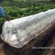 種蒔きした茶豆の苗移植の巻☆