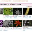 Gooブログとみんなの花図鑑のこと