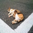 6月19日(火)のつぶやき よく猫に会う。しかも逃げない。駐車スペースのV字に合わせ寝てるw 愛猫家 猫の飼い主 白猫ミルコ 毎食サラダは、味変えないと無理やなぁ